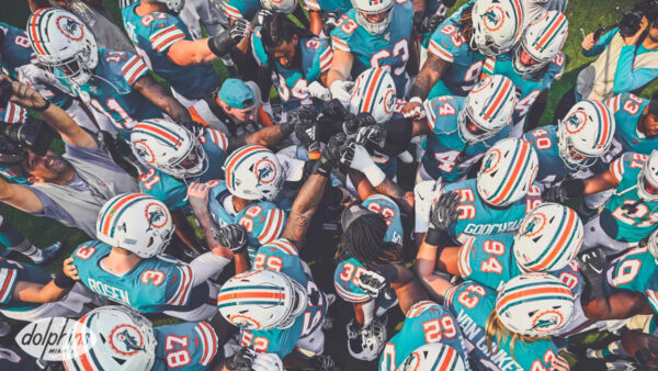 Wins are More Important Than Losses for These Dolphins